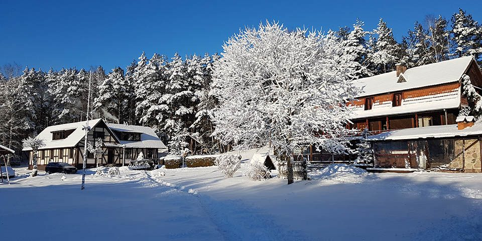 bertasiunai winter 01